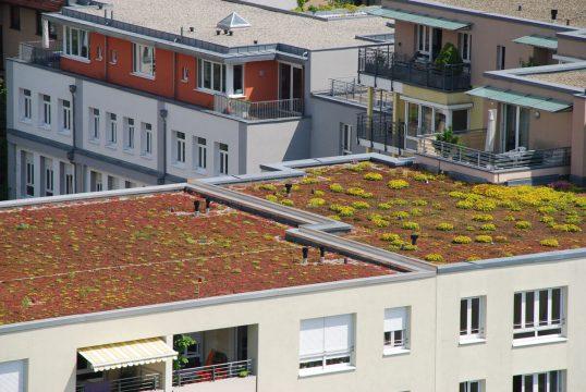 Flachdächer mit Begrünung und Dachterrasse